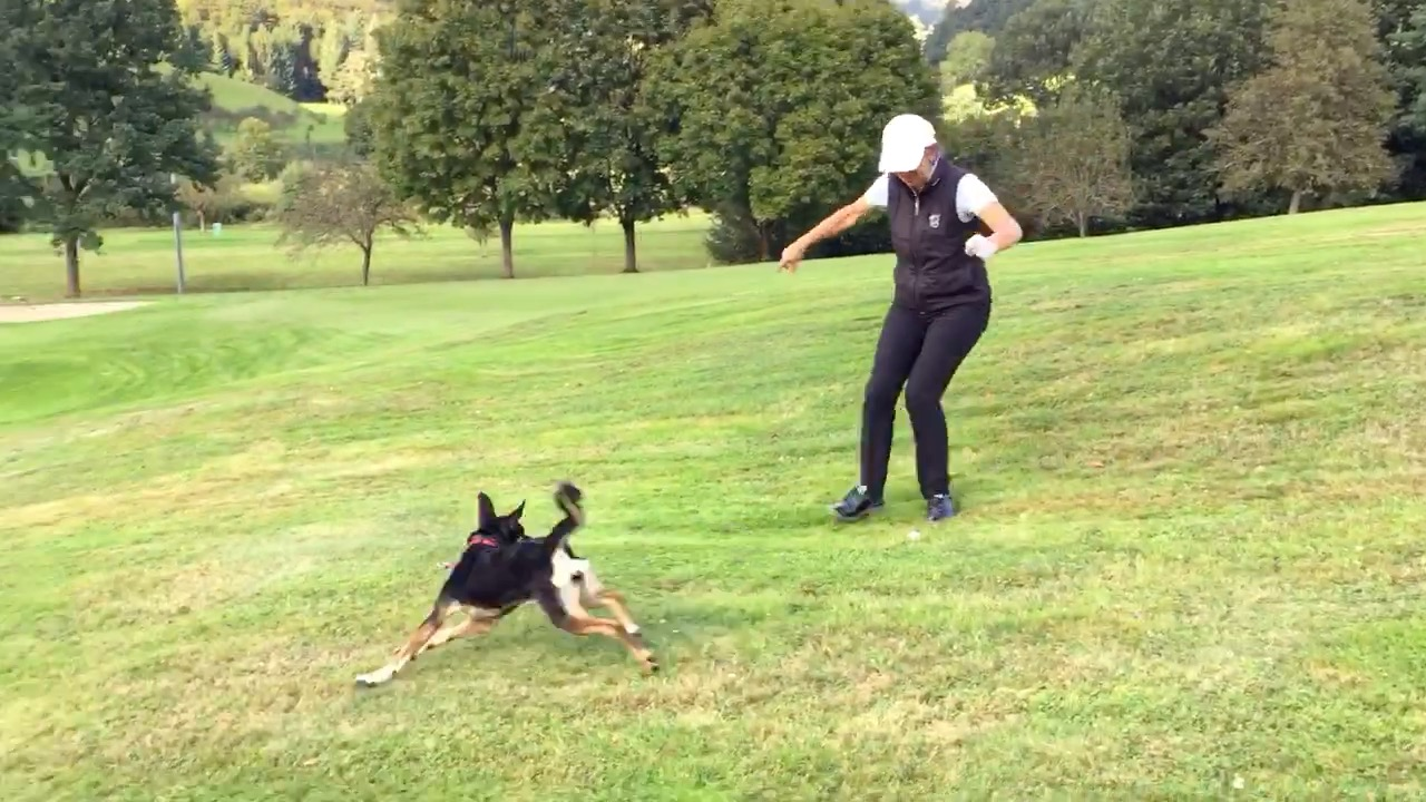 Golf_mit_Hund5